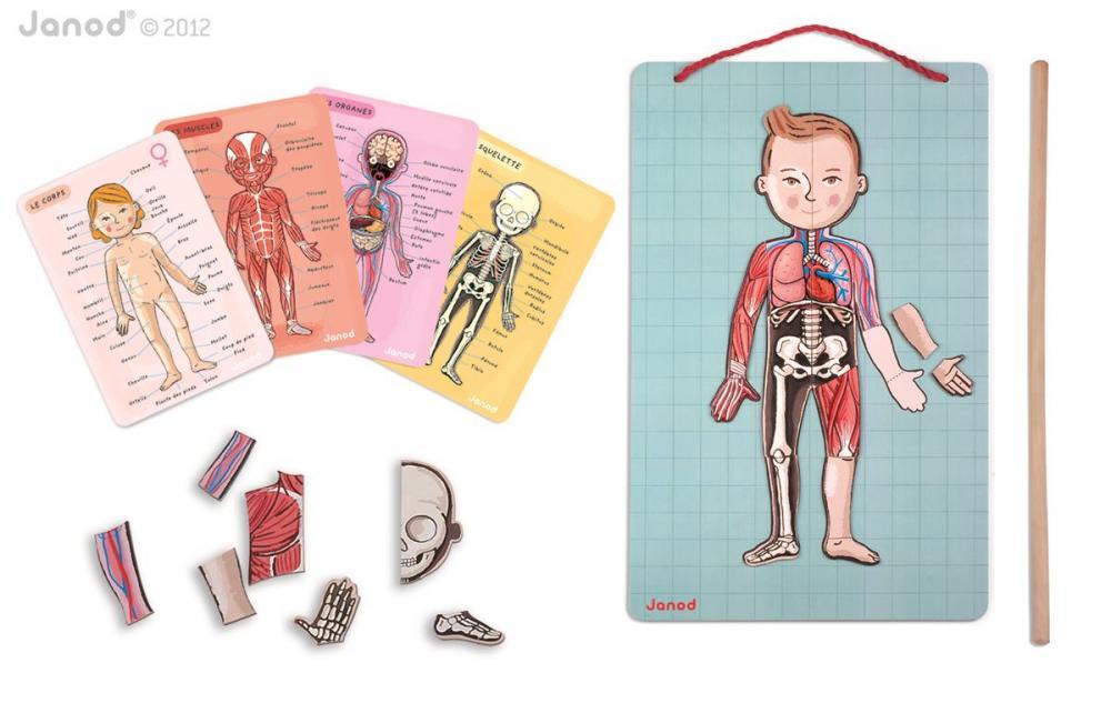 Janod Magnetická skladačka Ľudské telo Bodymagnet